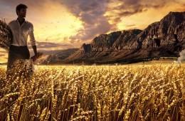 Relazione tra Alimentazione e Antroposofia